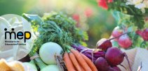 Se observan diferentes vegetales y verduras.