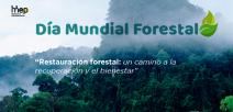 Se ilustra bosques acompañandos de neblina